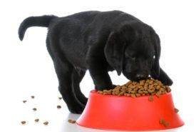 Best vet recommended puppy foods