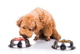 Can a dog have a sensitive stomach – Can choosing the right food help
