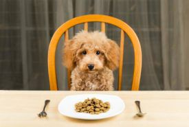 How to deal with sensitive stomach problems in dogs