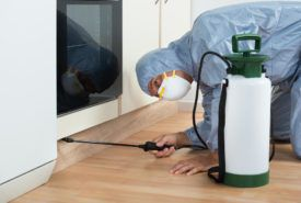 How to prevent bedbug infestation with sprays