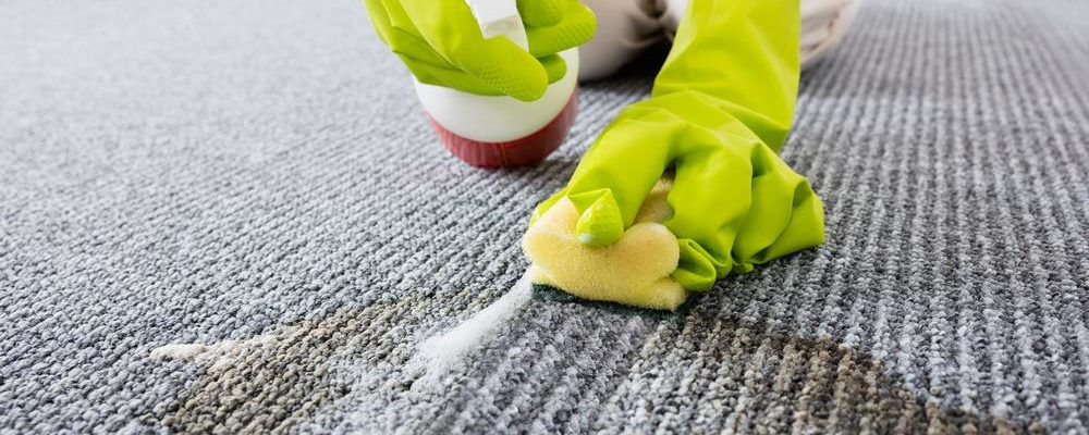How to remove coffee stains, pet mess, and ink stains from your carpet