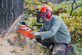 Tips to buy chainsaw for the first time