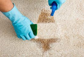 Top 6 ways to keep your carpet clean